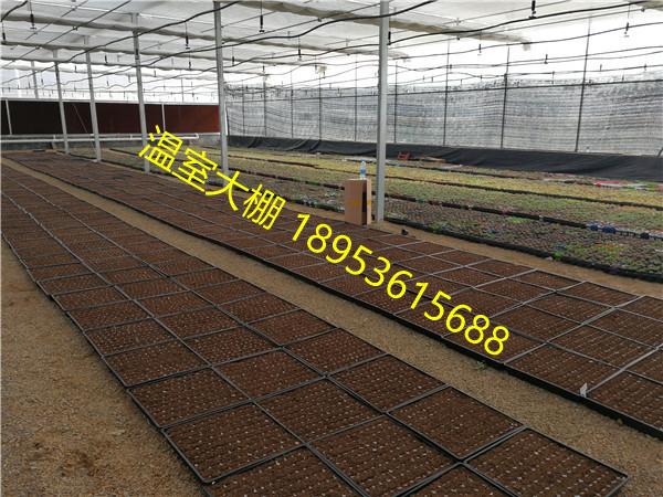 滨州智能连栋温室大棚种植多肉植物前景