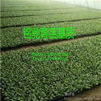 育苗基质加工厂家 育苗基质加工材料 育苗