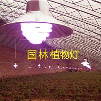 盆景植物灯-植物灯