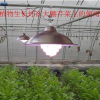 内蒙古灯泡种植物灯-植物灯
