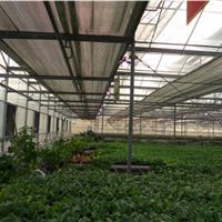 销售大棚花卉植物补光灯