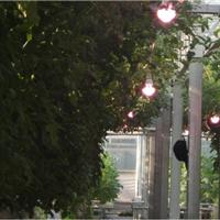 植物生长补光灯
