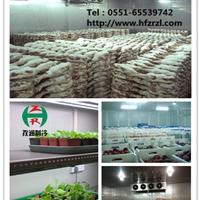 供应专业冷库设计合肥冷库安装保鲜冷库出售