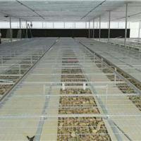 供应镀锌电焊网钢筋网地热网苗床网片厂家