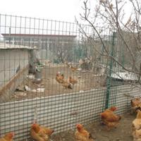 供应养殖护栏网养鸡护栏钢丝围栏网