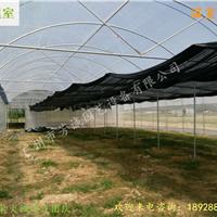 供应温室大棚*蔬菜大棚案例*大棚工程承接