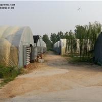供应格润农业陕西塑料大棚纹络式智能型温室