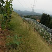 供应格润农业陕西塑料大棚建造纹络式智能型