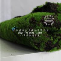 供应沈阳森海人造苔藓植物墙打底背景墙