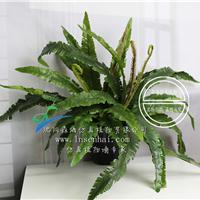 供应沈阳森海仿真大蕨叶盆栽植物绿植墙专家