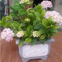 供应贵州六盘水花盆模具,水泥花盆模具批发