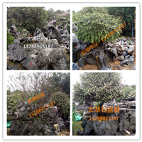 供应太湖石盆景 庭院景观盆景 景观太湖石