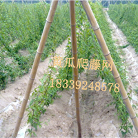 黄瓜攀爬网植物爬藤网百香果园艺网厂家