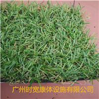 供应广州时宽景观休闲人造草四色仿真塑料草