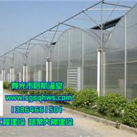 专业加工各种温室大棚――寿光市启航温室工程有限公司