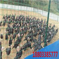 铁丝网供应商 荷兰网报价 养殖围栏网规格
