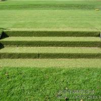 人造草有限公司 天津足球草球场建设