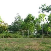供应长葛优质绿化苗木