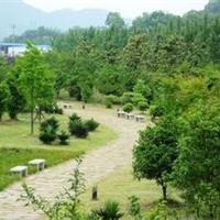 许昌绿化树养护技术