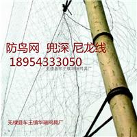 供应 标准 防鸟网