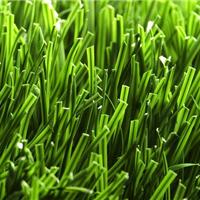 天津足球场地草坪 高弹人造草坪