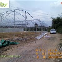 供应温室大棚―蔬菜大棚―广州圆顶蔬菜大棚