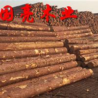 打桩木松木桩煤矿坑木檩条落叶松白松批发