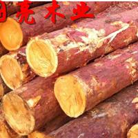 供应白松原木松木桩檩条厂家直销