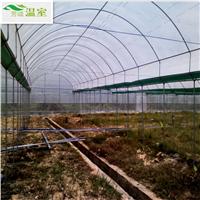 广东蔬菜大棚*蔬菜大棚建设*温室大棚施工