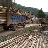 供应绿化杉木杆