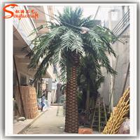 仿真海藻树  棕榈树 花园装饰树厂家批发