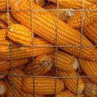 供应东北圈苞米网 圈玉米网 圈玉米网规格
