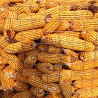 黑龙江圈玉米网- 5cm防锈圈玉米网厂家直销