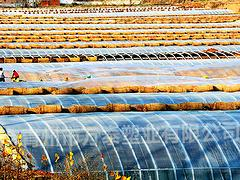 名声好的EVA农膜供应商推荐|EVA农膜行情