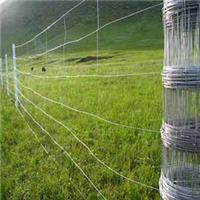 供青海大通草原网和互助草原围栏网厂家