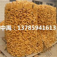 河南1.5m圈玉米电焊网通风防潮镀锌铁丝网厂