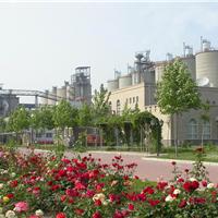 供应中低热硅酸盐42.5水泥