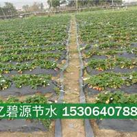 供应泰安大棚草莓膜下滴灌设备厂家