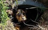 小狗被汽车撞骨折,它忍痛一个月躲进排水管-汽车排水管