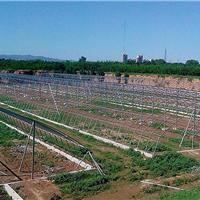 供应哈尔滨生态温室大棚 绥化蔬菜大棚