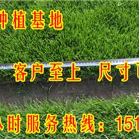 天津草坪|草坪种植|草皮种子多少钱一斤