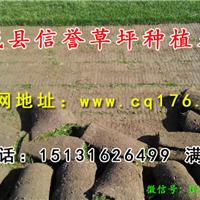 临县草坪|求购四季青草坪|四季青草籽