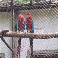 动物园防护网珍贵鸟防护网动物园天网