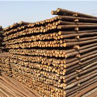 北京哪里卖杉木,杉木价格