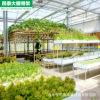 供应大棚遮阳覆盖栽培有哪些注意事项