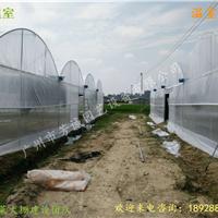 广东蔬菜大棚造价/江门蔬菜大棚施工