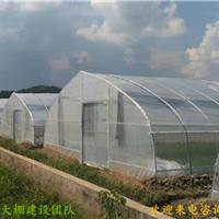 惠州蔬菜大棚/塑料大棚搭建