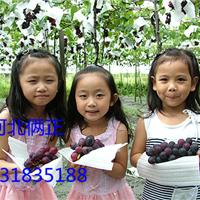 春季葡萄园里搭架用的钢丝葡萄搭架专项使用钢丝