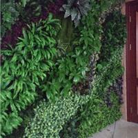 上海垂直绿化墙 上海墙体绿化公司