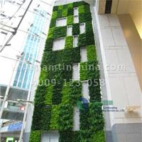 做植物墙有哪些经济效益和社会效益